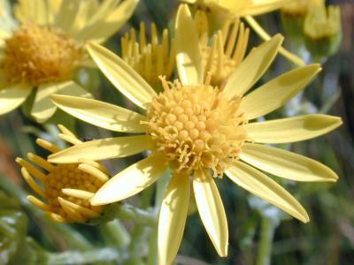 20060527214252-natureflower1343.jpg