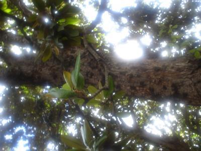 20061211192708-granadadic06-149.jpg